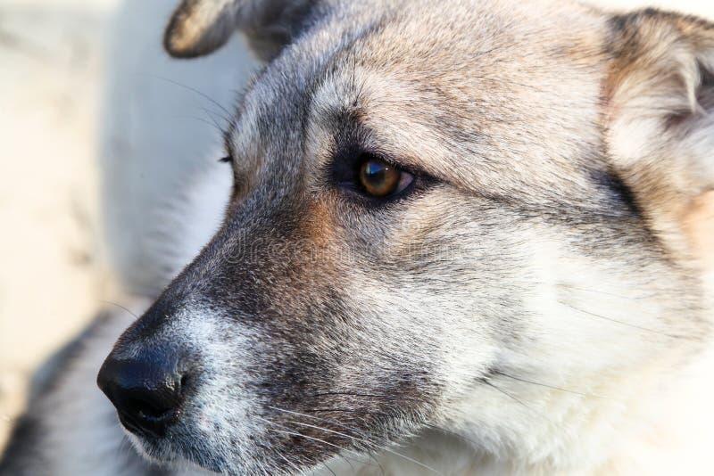Hoofd van een hond royalty-vrije stock afbeeldingen