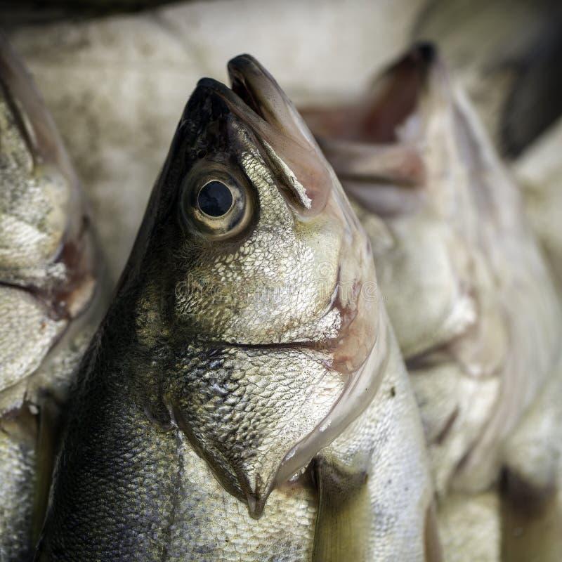 Hoofd van een vis stock foto