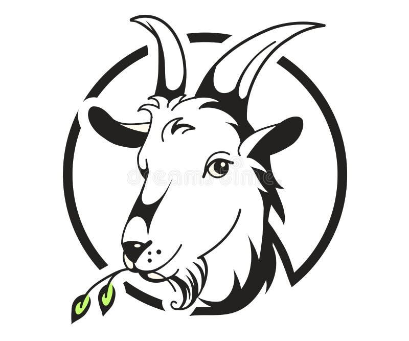 Hoofd van geit op witte achtergrond royalty-vrije stock afbeeldingen