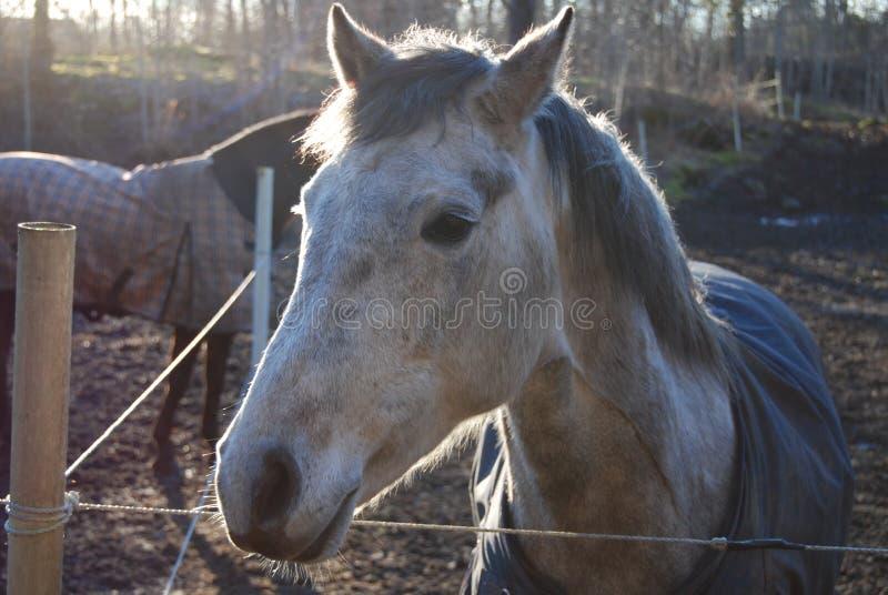 Hoofd van het paard 4 royalty-vrije stock foto