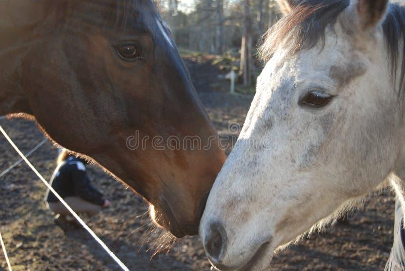 Hoofd van het paard 6 stock fotografie