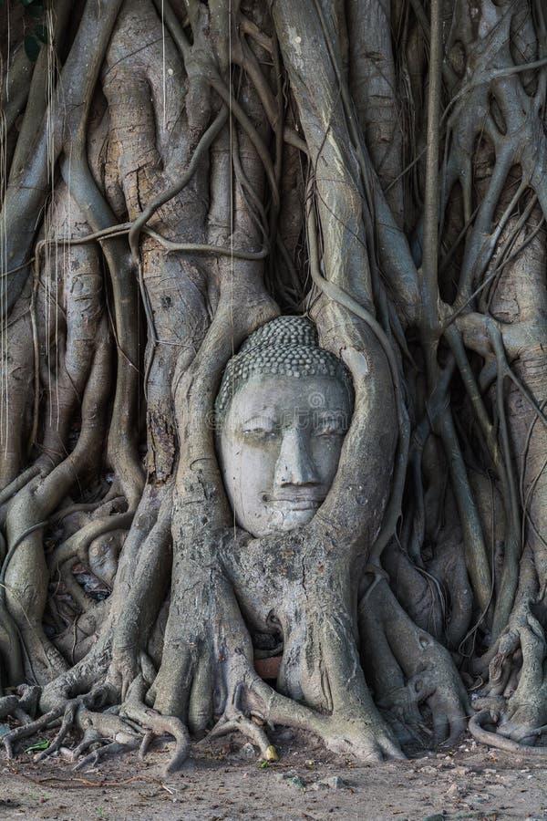 Hoofd van het standbeeld van Boedha in de Pho-boomwortels bij Wat Mahathat-temperaturen stock fotografie