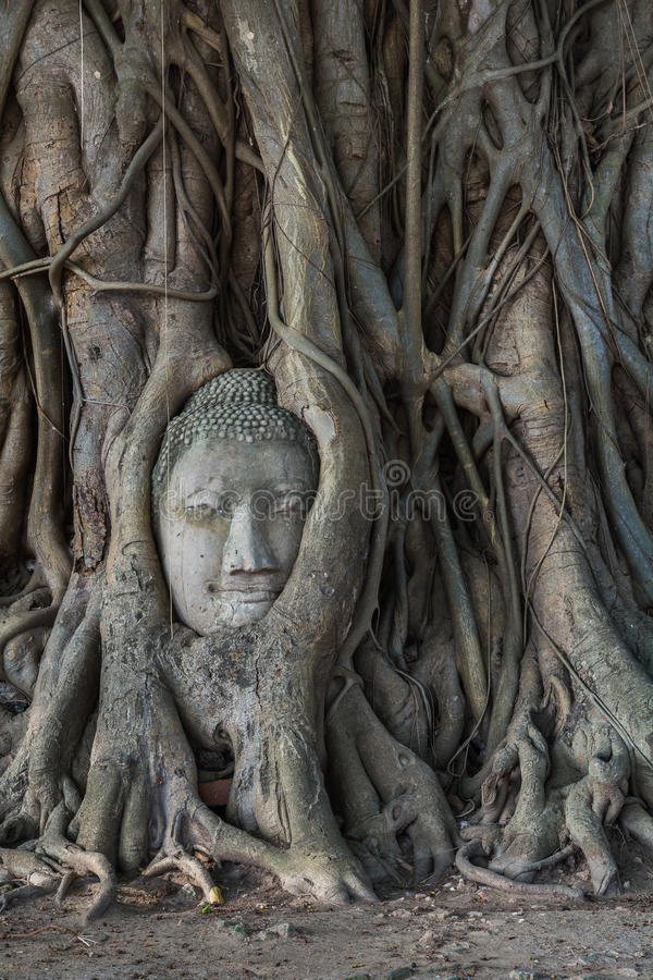Hoofd van het standbeeld van Boedha in de Pho-boomwortels bij Wat Mahathat-temperaturen stock foto's