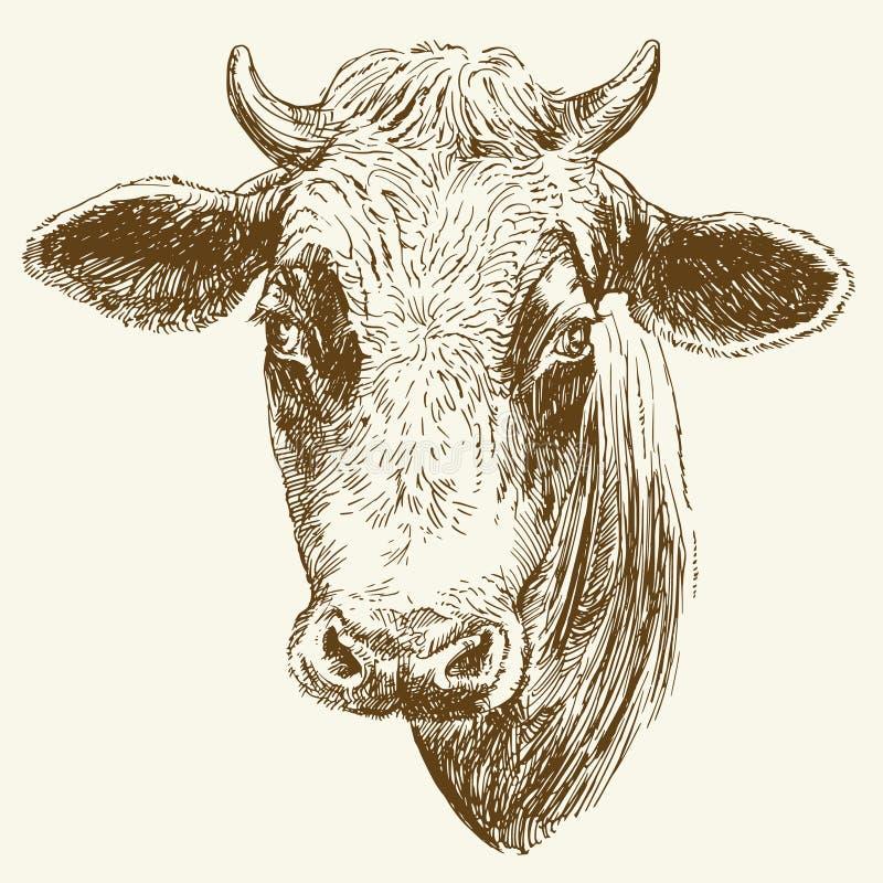 Hoofd van koe royalty-vrije illustratie