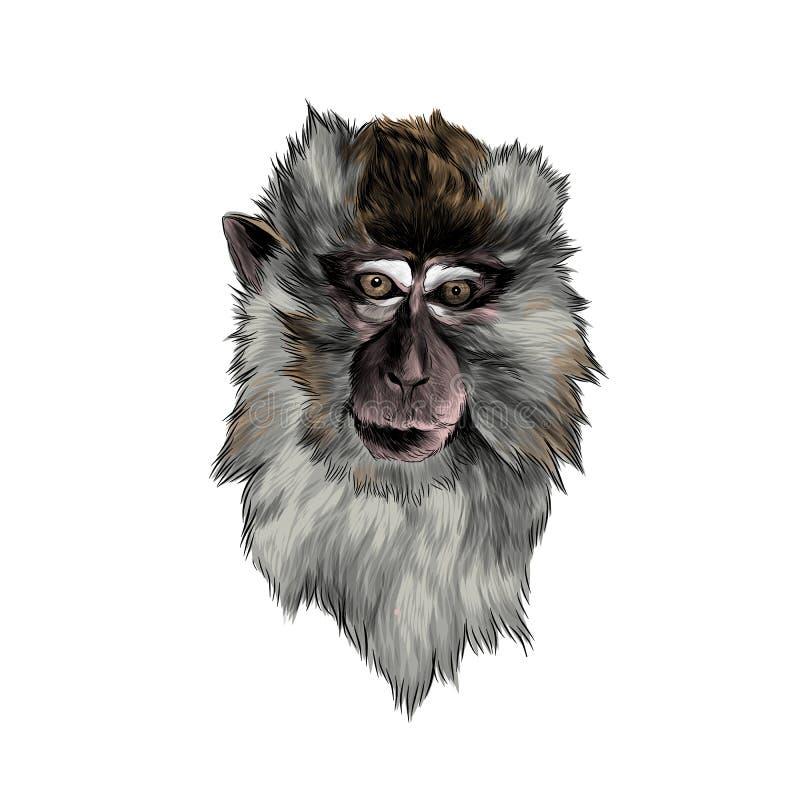 Hoofd van macaque in volledig gezicht op witte achtergrond vector illustratie