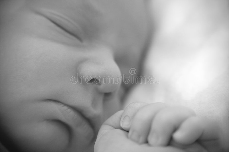 Hoofd van pasgeboren royalty-vrije stock afbeeldingen