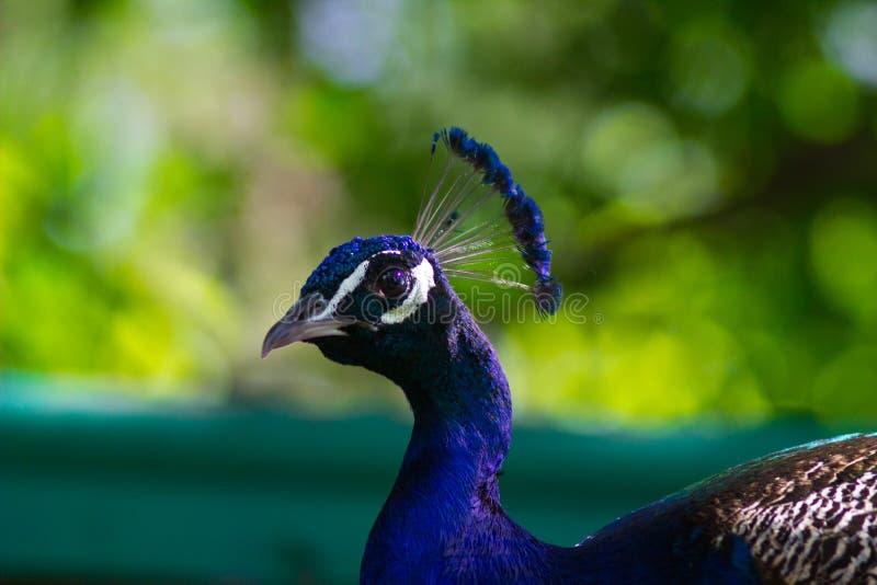 Hoofdvogel stock afbeelding