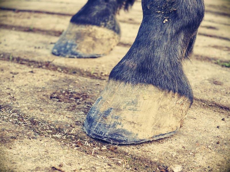 Hoofs van paard na smidszorg Duidelijke hoofs stock fotografie