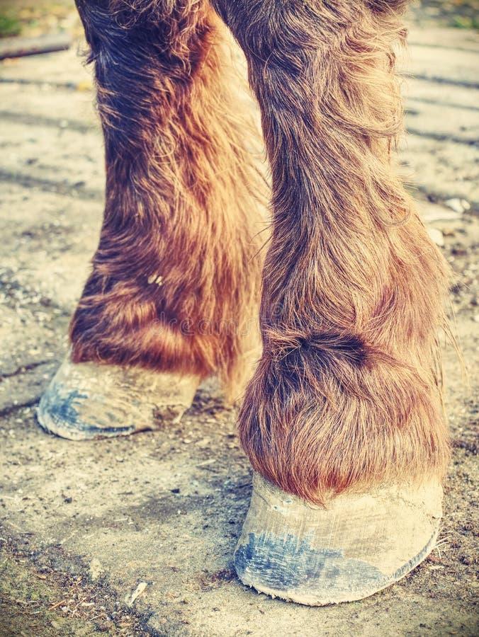 Hoofs van paard na smidszorg Duidelijke hoofs royalty-vrije stock afbeeldingen