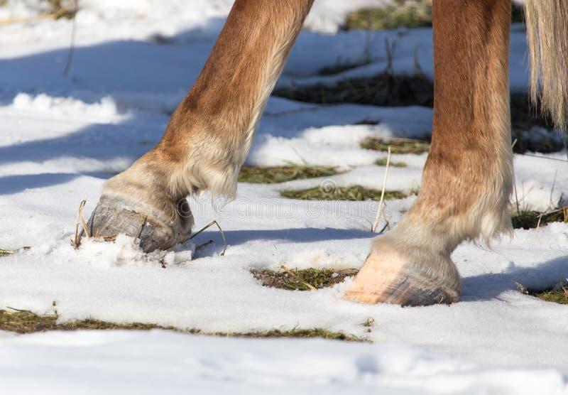 Hoofs van paarden in de winter stock foto's