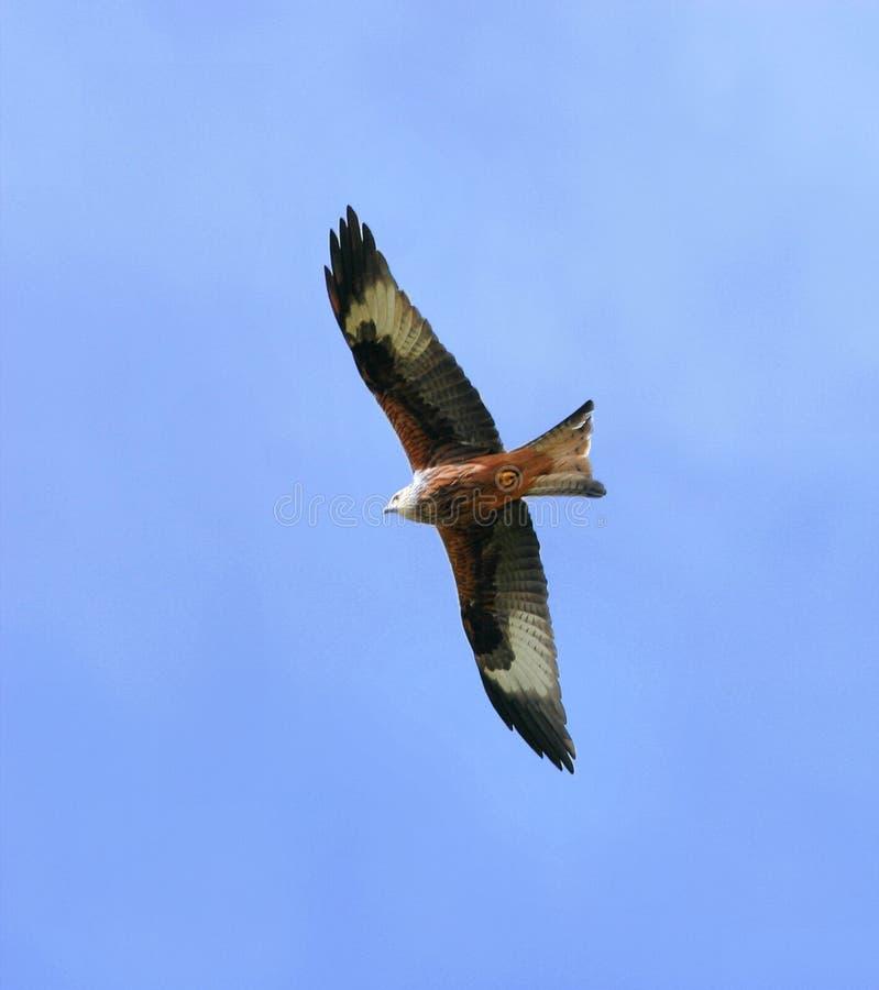 Hoog als Vlieger