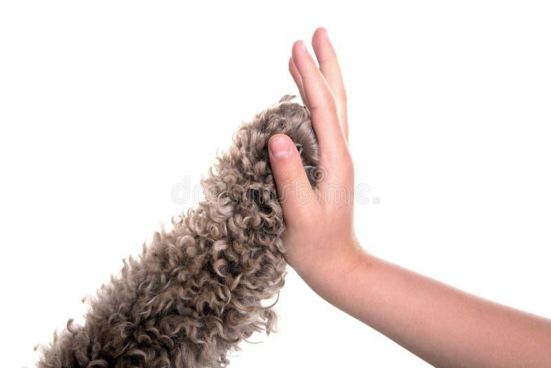 Hoog hond vijf en meisje royalty-vrije stock afbeeldingen