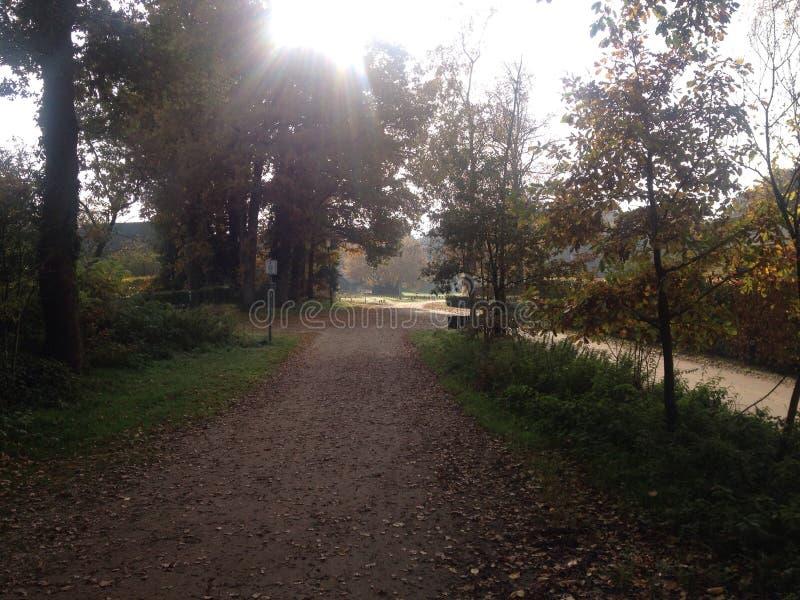Hoog Soeren, sunny morning, Veluwe royalty free stock image