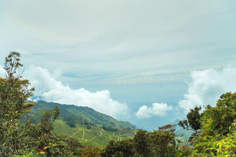 hooggebergte op de wolk bosceylon, Azië stock foto's