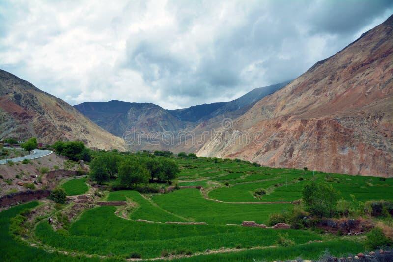 hooglandgerst die door berg wordt omringd stock foto