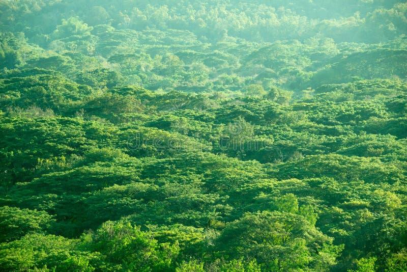 Hoogste bos abstracte de aardachtergrond van de menings groene boom royalty-vrije stock foto