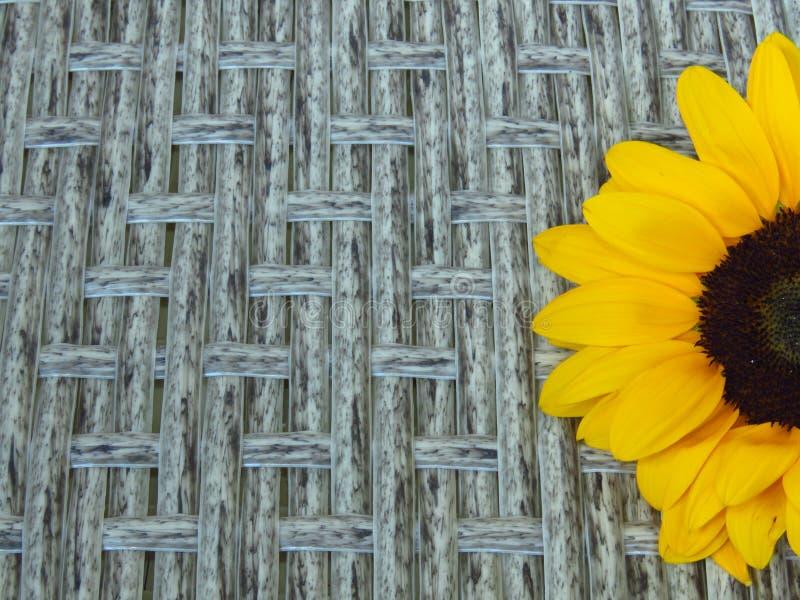 Hoogste Close-upmening van Geeloranje de Zomer Lange Zonnebloemen van Sunrich op rotan achtergrondtextuur stock fotografie