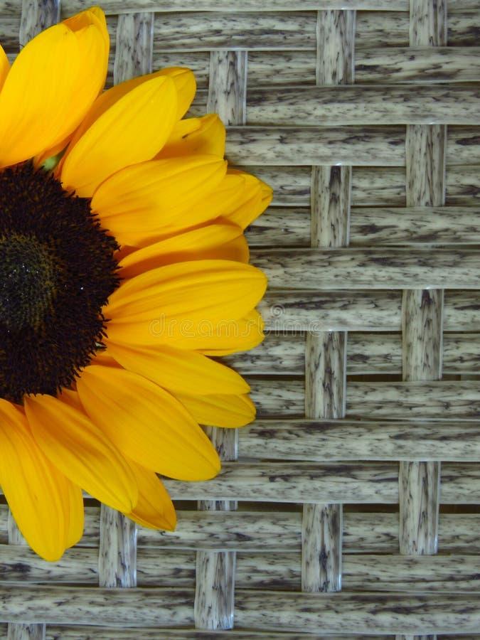 Hoogste close-upmening van Geeloranje de Zomer Lange Zonnebloemen van Sunrich op rotan achtergrondtextuur royalty-vrije stock afbeelding