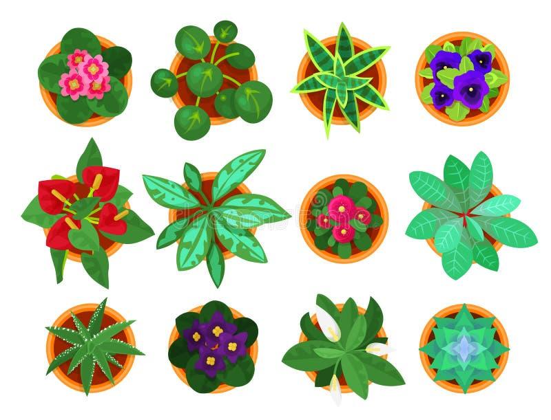 Hoogste de meningsreeks van de huisinstallatie, houseplants voor huisbinnenland vector illustratie
