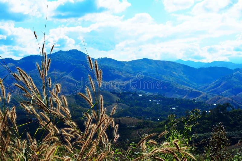 Hoogste gras op de berg Mooie noordelijke landschappen in aard stock afbeeldingen
