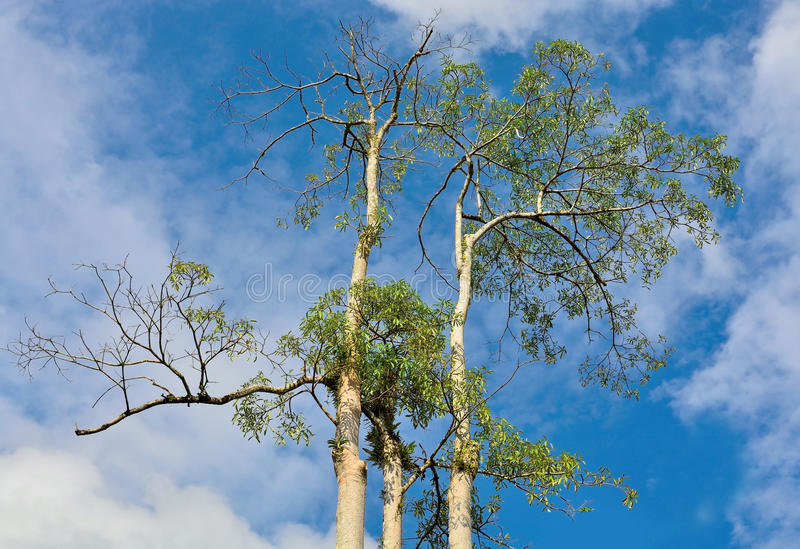 Hoogste hoge bomen royalty-vrije stock fotografie