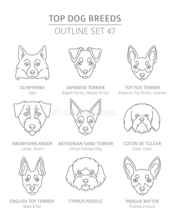 Hoogste hondrassen De jacht, herder en metgezel geplaatste honden De inzameling van het huisdierenoverzicht vector illustratie