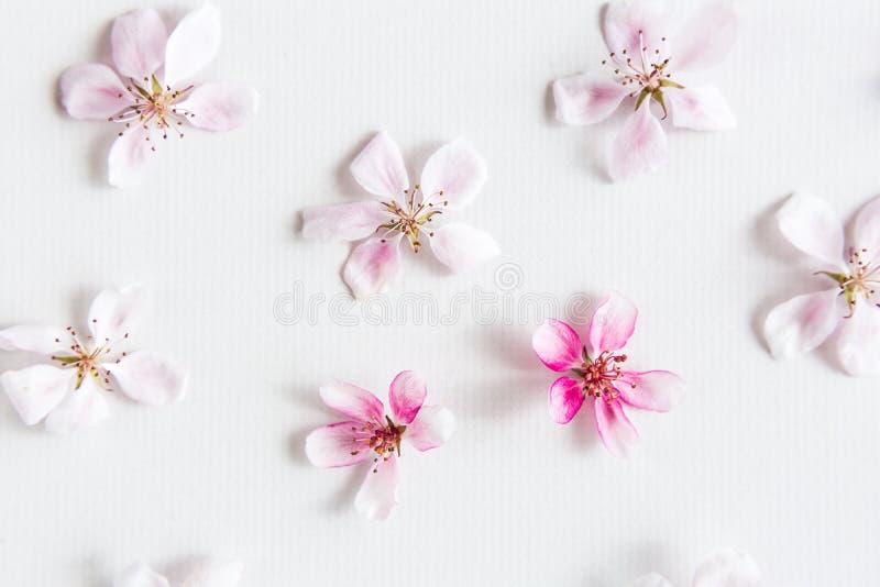 Hoogste mening over witte achtergrond die met sacurabloemen vullen Concept liefde hallo zeer belangrijk de lentepatroon Dof op sa stock afbeeldingen