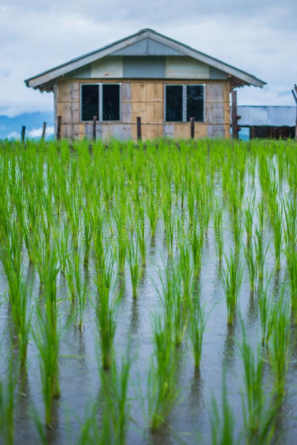 Hoogste-mening Terrasvormig Paddy Field in mae-Jam Dorp, Chaingmai stock fotografie