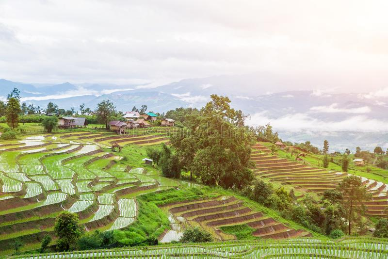 Hoogste-mening Terrasvormig Paddy Field in mae-Jam Dorp, Chaingmai stock foto's