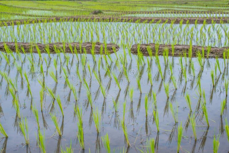 Hoogste-mening Terrasvormig Paddy Field in mae-Jam Dorp, Chaingmai royalty-vrije stock afbeelding