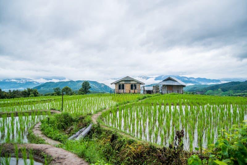 Hoogste-mening Terrasvormig Paddy Field in mae-Jam Dorp, Chaingmai royalty-vrije stock afbeeldingen
