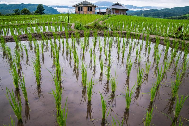 Hoogste-mening Terrasvormig Paddy Field in mae-Jam Dorp, Chaingmai royalty-vrije stock fotografie