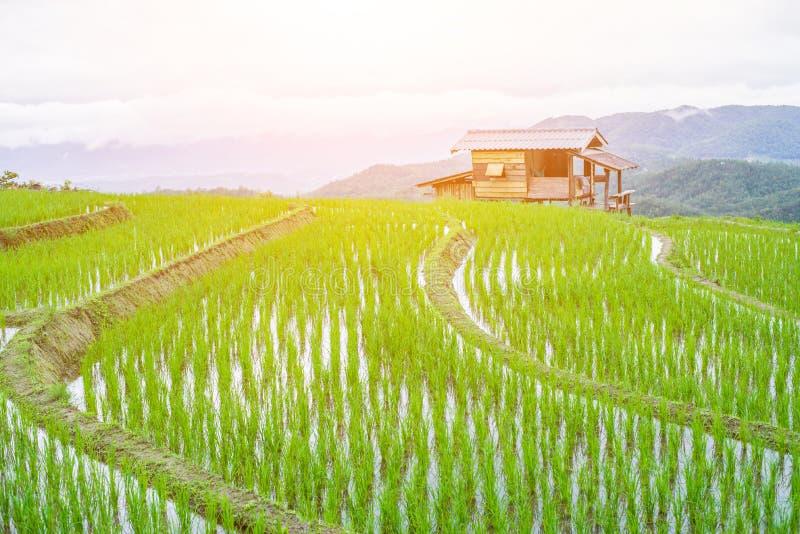Hoogste-mening Terrasvormig Paddy Field in mae-Jam Dorp, Chaingmai royalty-vrije stock foto's