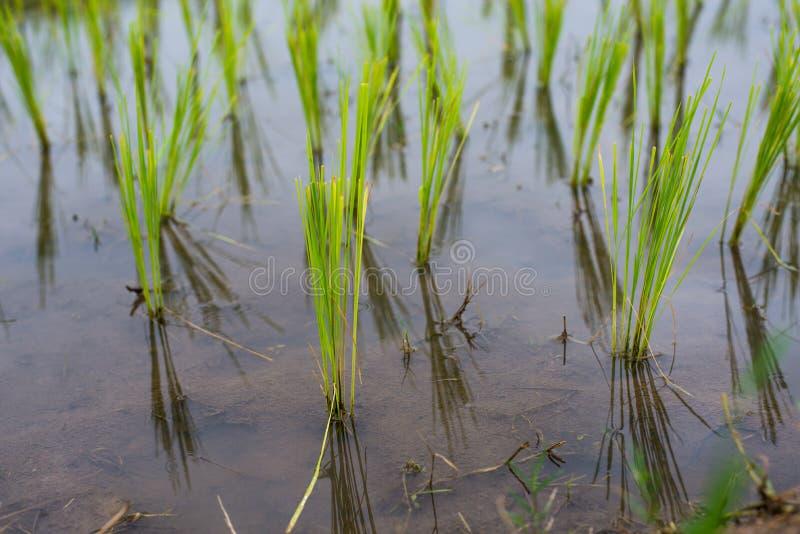 Hoogste-mening Terrasvormig Paddy Field in mae-Jam Dorp, Chaingmai stock foto