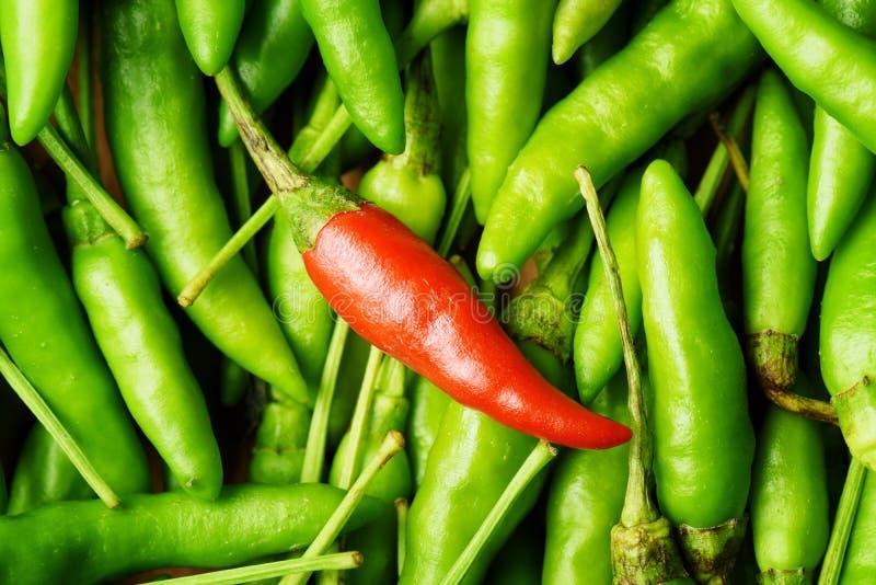 Hoogste mening van één roodgloeiende Spaanse peperpeper onder heel wat green stock fotografie