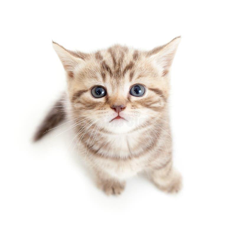 Hoogste mening van babykat op witte achtergrond stock afbeelding