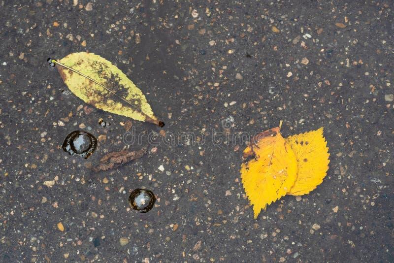 Hoogste mening van bellen en gele bladeren in vulklei stock afbeelding