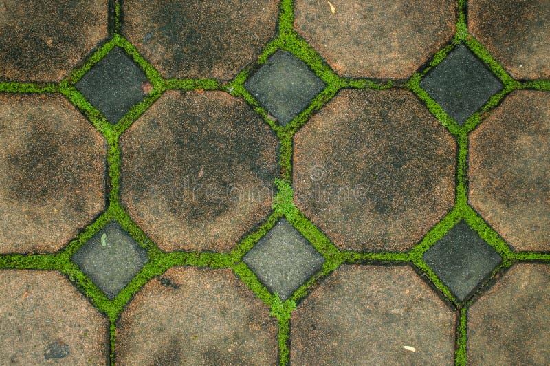 Hoogste mening van de blokken van het gangcement met mos stock afbeeldingen