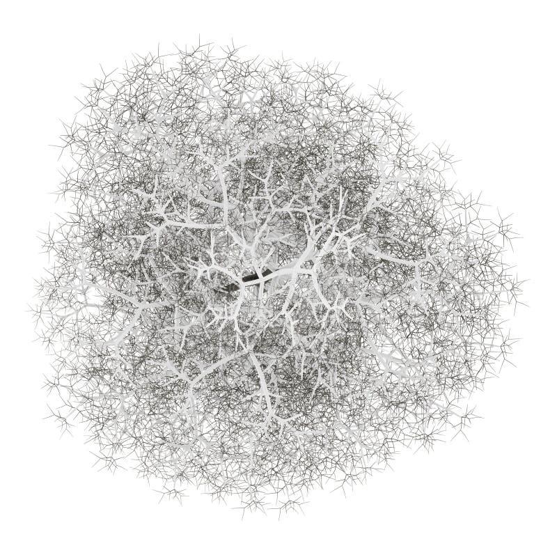Hoogste mening van de winter gemeenschappelijke die lindeboom op wit wordt geïsoleerd royalty-vrije illustratie