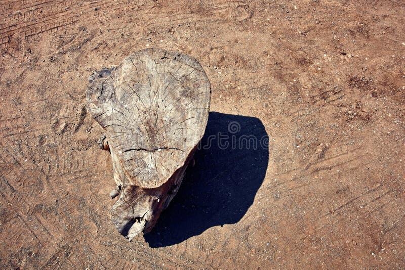 Hoogste mening van een houten stomp in een droog milieu royalty-vrije stock fotografie