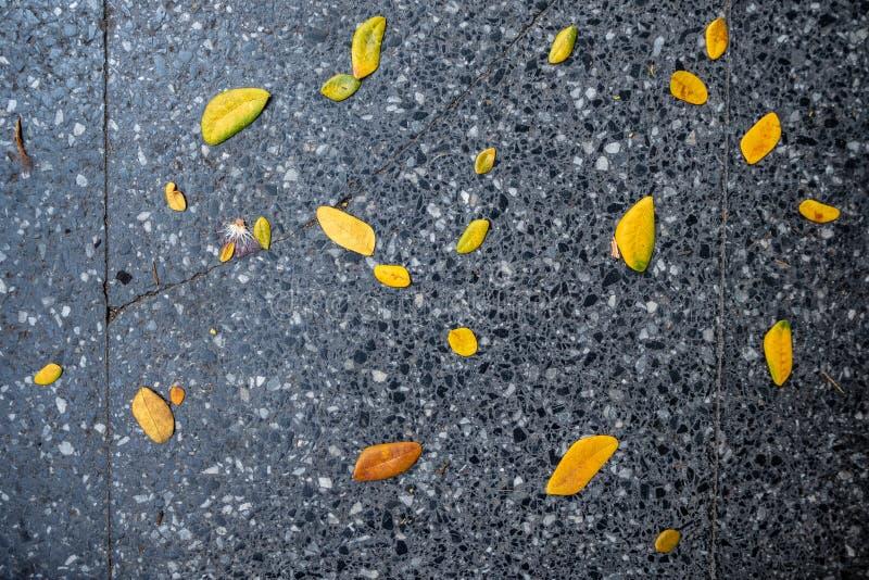 Hoogste mening van gele bladerendaling op zwarte tegelsvoetganger stock afbeeldingen