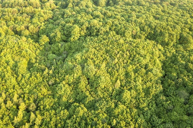 Hoogste mening van groen bos op zonnige de lente of de zomerdag Hommelfotografie, abstracte achtergrond stock afbeeldingen