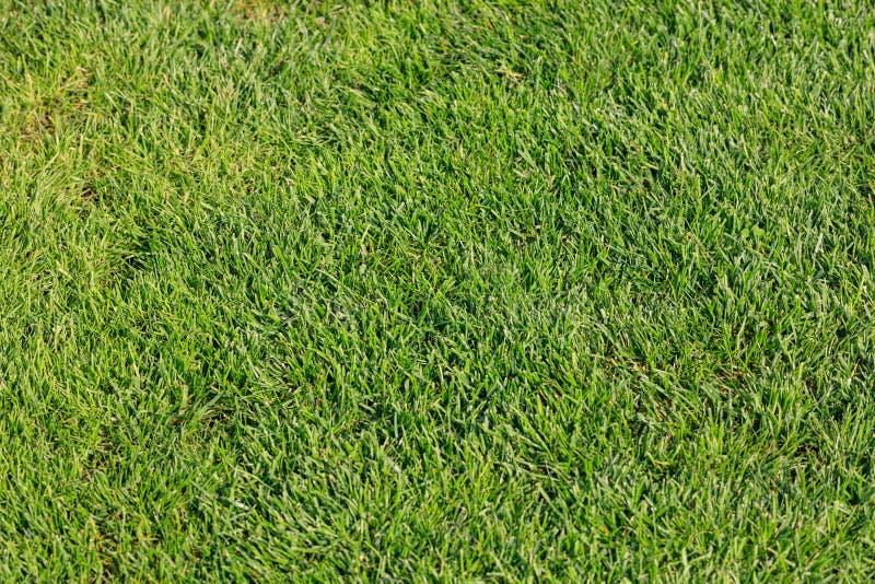 Hoogste mening van groen gras voor achtergrond stock afbeelding