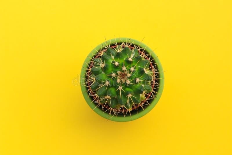 Hoogste mening van leuke kleine cactus in groene pot op heldere gele achtergrond royalty-vrije stock afbeelding