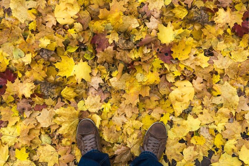 Hoogste mening van mensen` s tennisschoenen Een mens bevindt zich op een geel de herfstgebladerte royalty-vrije stock fotografie