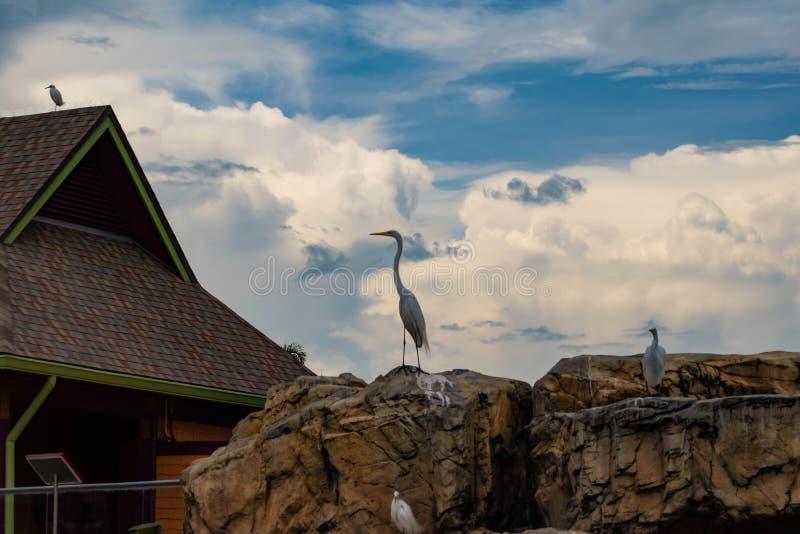 Hoogste mening van mooie vogel op lichtblauwe hemel bewolkte achtergrond in Seaworld royalty-vrije stock foto's