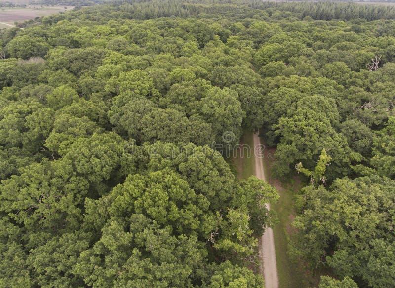 Hoogste mening van Nieuw Bos eiken hout met voetpad royalty-vrije stock fotografie