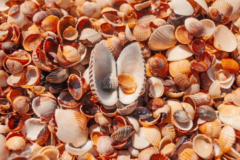 Hoogste mening van open zeeschelp op het strand royalty-vrije stock foto