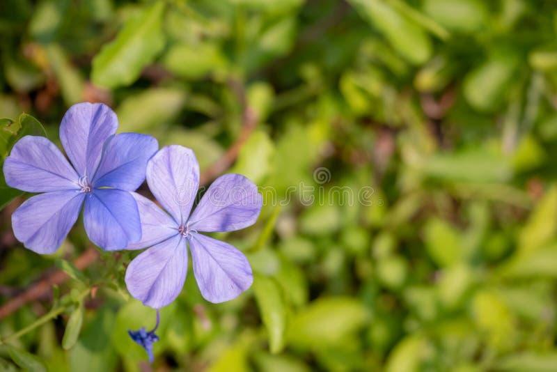 Hoogste mening van purpere bloemen op vage groene bladachtergrond stock foto