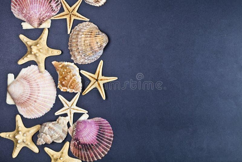 Hoogste mening van shells en zeestergroep op zwarte achtergrond stock fotografie
